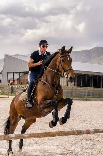 Jumping horse - important things to consider nearshoring